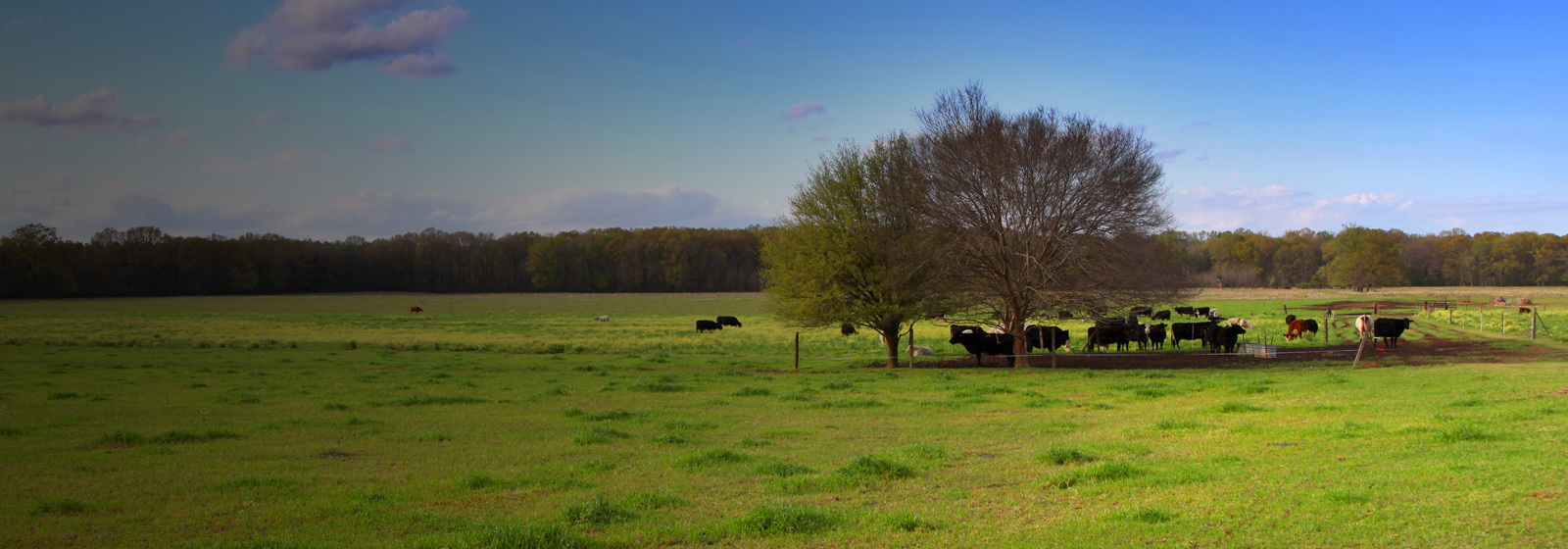 Mississippi Farm and Cattle